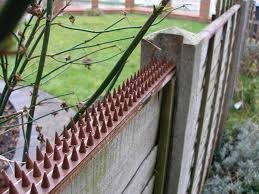How To Keep Unwanted Cats Out Of Your Garden With Cat Fence Spikes 2020