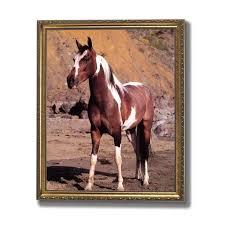 Western Cowboy Pinto Horse Kids Room Animal Wall Picture Gold Framed Art Print Walmart Com Walmart Com