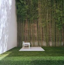 backyard garden with high tall walls