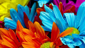 صور ورد صور ورود متنوعه حمراء زرقاء جميلة لامعه نوع جديد من