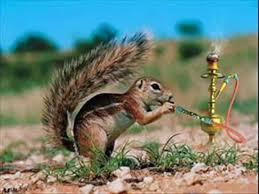 صور حيوانات مضحكة صور جديدة للحيوانات كيوت