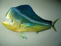 mahi mahi 62 full mount fiberglass fish