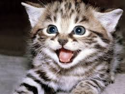 صور قطط صور قطط مضحكة Happy Kitten Funny Cat Wallpaper