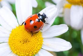 Lovely Little Ladybugs