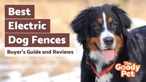 6 Best Electric Dog Fence November 2020 Reviews The Goody Pet