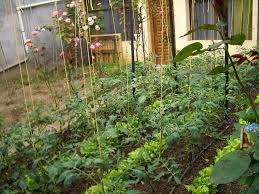 planting a vegetable garden this and