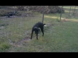 Dog Pees On Electric Fence Youtube