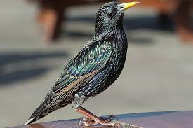 keep birds off of patio furniture
