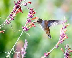 صور طيور للأطفال ملونة أجمل طيور العالم