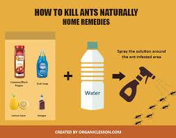 44+ Natural Ant Killer Outside  Background