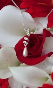 white rose background wallpaper 08054