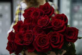 صور ورد احمر رومانسي اجمل تشكيله صور ورد احمر قبلات الحياة