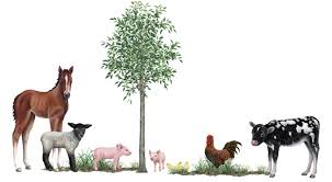 Farm Animal Wall Decals Nursery Wall Decals