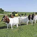 Best Electric Fence For Goats On The Market 2020 Update