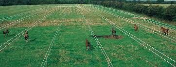 Horseguard Fencing Possibilities