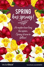 springtime greeting card of spring flowers vector image