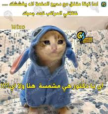 محمد هنيدى يدخل ترند القطة بمشهد من فيلم صعيدى فى الجامعة