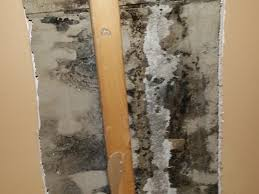mold removal on drywall by louisville