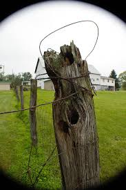 My Old Fence Post Photograph By Tammy Rogers