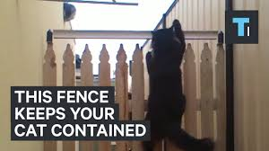 This Fence Will Keep Your Cat Contained Youtube