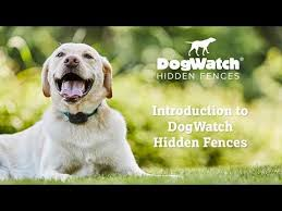 Introduction To Dogwatch Hidden Fences Youtube