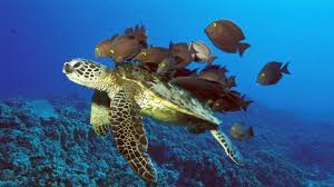 sea turtle wallpaper turtles