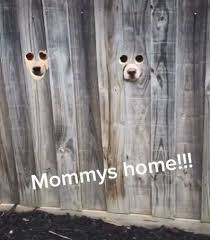Tiktok Users Drill Holes In Fence To Allow Dogs To Spy On Neighbours 9honey