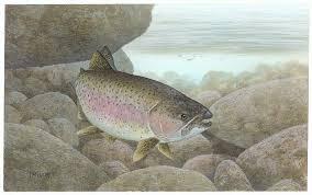 rainbow trout 1080p 2k 4k 5k hd