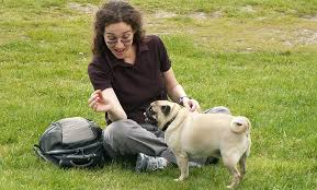 how to feed my pug what and how often