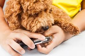 5 tips for t your dog s nails