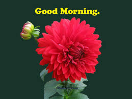 good morning flowers good morning fun