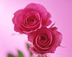 المنوعات والصور صور ورد من اجمل الورد صور ورد 2014