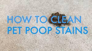 clean pet sns from carpet