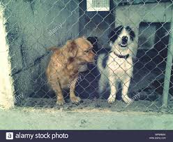 Portrait Of Two Dogs Behind The Fence Stock Photo Alamy