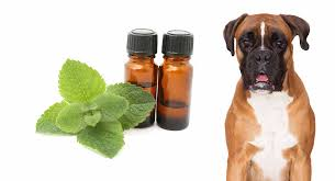 is peppermint oil safe for dogs and