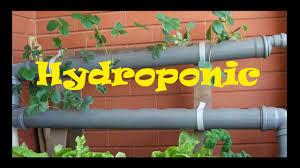 hydroponics homemade hydroponic nft