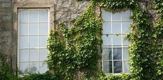 Can Ivy Damage Brick Or Wood On Your Home Today S Homeowner