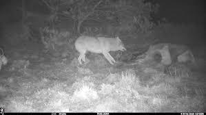 Dood Doet Leven Voor Raaf Vos Wild Zwijn En Wolf Ark