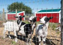 Fencing For Dairy Goats Mother Earth News