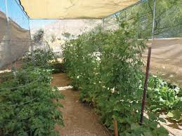 growing vegetables in the desert las