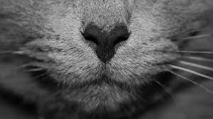 cat allergies jackson galaxy