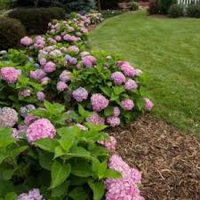 Planting Along Fence Line Landscaping Along Fence Ideas