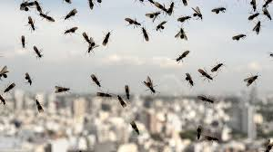 29+ Weather Flying Ants  PNG