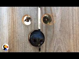Dog Gets Custom Fence Holes To Visit Neighbor The Dodo Youtube