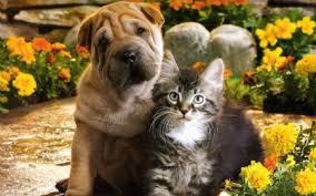 flowers puppy kitten cats s