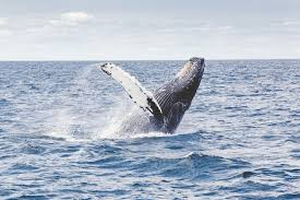 the best whale watchins in mexico
