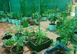 vegetable terrace gardening a