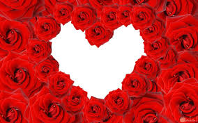 صور ورد أحمر رمز الحب والرومانسية روعة