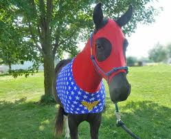costumes for horses wonder woman your