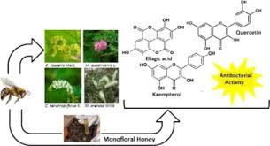 polyphenolic profile and antioxidant